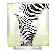 Zebra Art Shower Curtain