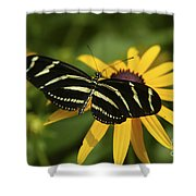 Zebra Butterfly Shower Curtain