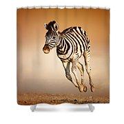 Zebra Calf Running Shower Curtain