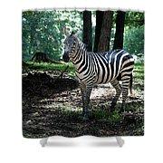 Zebra Forest 2 Shower Curtain