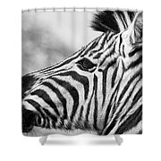 Zebra Head Profile Shower Curtain