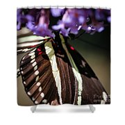 Zebra Heliconian Heliconius Charithonia Shower Curtain