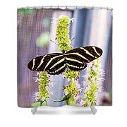 Zebra II Shower Curtain