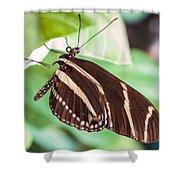 Zebra Iv Shower Curtain