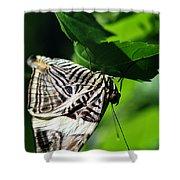 Zebra Long-wing Butterfly  Shower Curtain