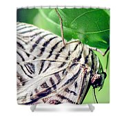 Zebra Long-wing Close-up Shower Curtain