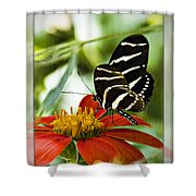Zebra Longwing 2 Shower Curtain