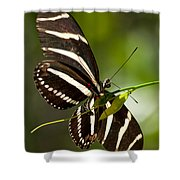 Zebra Longwing 3 Shower Curtain