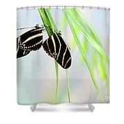 Zebra Longwing Butterflies Mating Shower Curtain