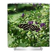 Zebra Longwing Butterfly On Flower Shower Curtain
