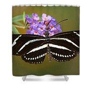 Zebra Longwing Shower Curtain