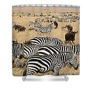 Zebra Migration Maasai Mara Kenya Shower Curtain