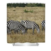 Zebra On Masai Mara Plains Shower Curtain