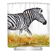 Zebra Panoramic Shower Curtain