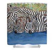 Zebra Pool Shower Curtain