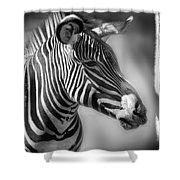 Zebra Profile In Black And White Shower Curtain