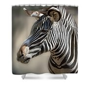 Zebra Profile Shower Curtain