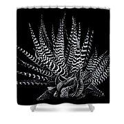 Zebra Succulent Shower Curtain