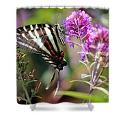 Zebra Swallowtail Butterfly At Butterfly Bush Shower Curtain