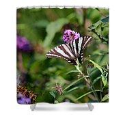 Zebra Swallowtail Butterfly In Garden Shower Curtain