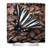 Zebra Swallowtail Butterfly Shower Curtain