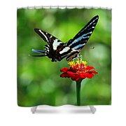Zebra Swallowtail Butterfly On A Red Zinnia Shower Curtain