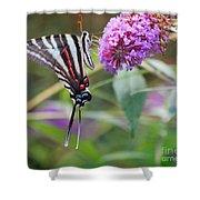Zebra Swallowtail Butterfly On Butterfly Bush  Shower Curtain