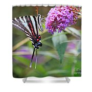 Zebra Swallowtail Butterfly On Butterfly Bush  Shower Curtain