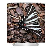 Zebra Swallowtail Butterfly Square Shower Curtain