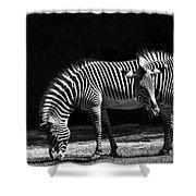 Zebra Unique Patterns Shower Curtain