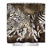 Zebras Shower Curtain