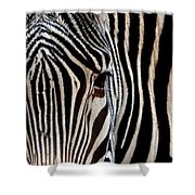 Zebras Face To Face Shower Curtain