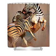 Zebras Fighting Shower Curtain by Johan Swanepoel