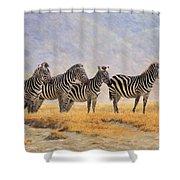 Zebras Ngorongoro Crater Shower Curtain by David Stribbling