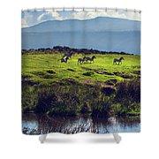 Zebras On Green Grassy Hill. Ngorongoro. Tanzania Shower Curtain