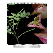 Zen Of Nature 4 Shower Curtain