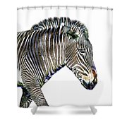 Zephyrus Zebra IIi Shower Curtain