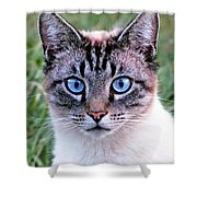 Zing The Cat Looking At Us Shower Curtain