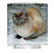 Zing The Cat On The Porch In The Snow 2 Shower Curtain
