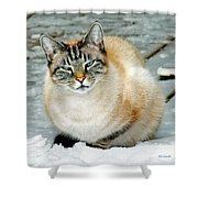 Zing The Cat On The Porch In The Snow Shower Curtain