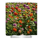 Zinna Variety Shower Curtain