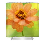 Zinnia On A Brilliant Spring Day Shower Curtain