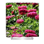 Zinnia Palooza Shower Curtain