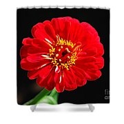 Zinnia Red Flower Floral Decor Macro Accented Edges Digital Art Shower Curtain