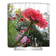 Zinnia Side View Shower Curtain