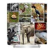 Zoo Collage Shower Curtain