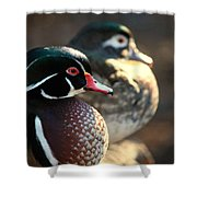 A Couple Of Wood Ducks Shower Curtain