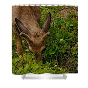 A Young Buck Grazing Shower Curtain