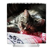 Angel Cat Shower Curtain