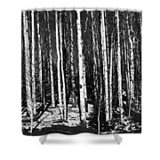 Aspen Tree Trunks Shower Curtain